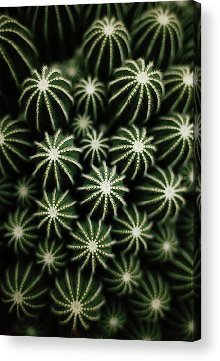 Scenics Acrylic Print featuring the photograph Cactus by T*tomorrow