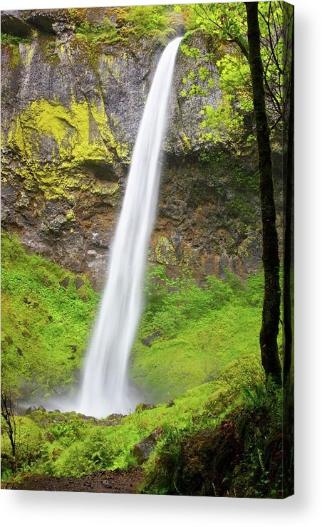 Scenics Acrylic Print featuring the photograph Elowah Falls In Columbia River Gorge by Design Pics / Craig Tuttle