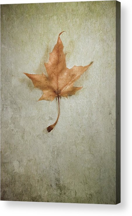 Leaf Acrylic Print featuring the photograph Last Days by Scott Norris