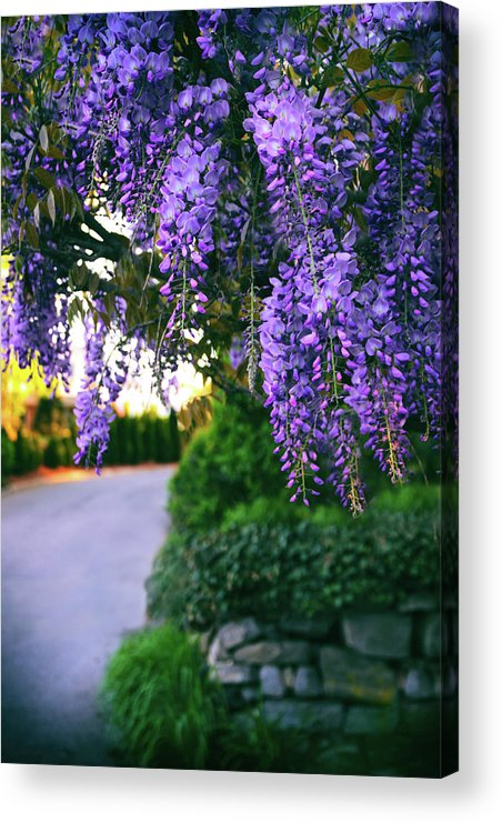Wisteria Acrylic Print featuring the photograph Wisteria At Sunset by Jessica Jenney