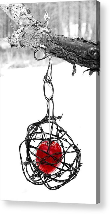 Cage Acrylic Print featuring the photograph Forbidden Fruit by Aaron Aldrich