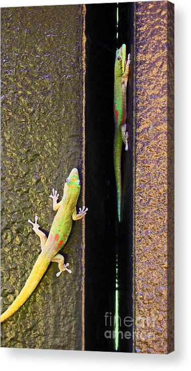 Gold Dust Day Geckos Acrylic Print featuring the photograph Gold Dusted Day Gecko by Jennifer Robin