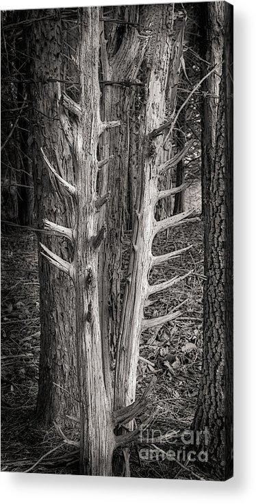 Scotopic Acrylic Print featuring the photograph Scotopic Vision 4 - Trees by Pete Hellmann