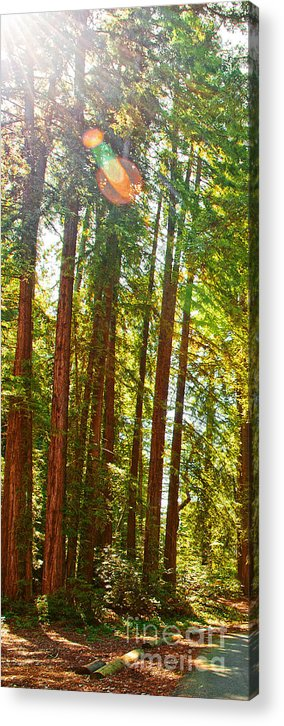 Redwoods Acrylic Print featuring the photograph Redwood Wall Mural Panel 1 by Artist and Photographer Laura Wrede