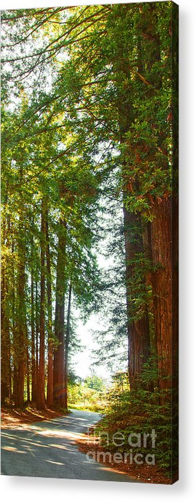 Redwoods Acrylic Print featuring the photograph Redwood Wall Mural Panel 2 by Artist and Photographer Laura Wrede