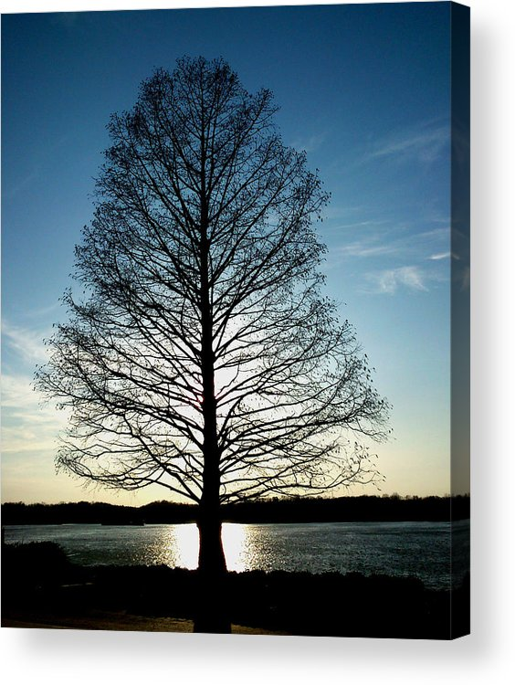 Tree Acrylic Print featuring the photograph A Lonely Tree by Lucy D