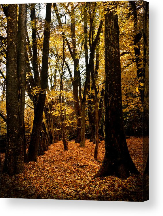 Bidwell Park Acrylic Print featuring the photograph Fall Scene In Bidwell Park by Robert Woodward