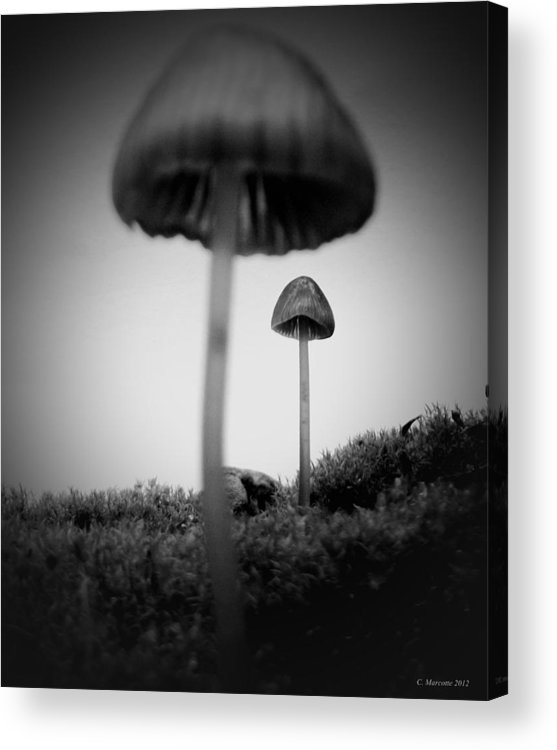 Mushrooms Acrylic Print featuring the photograph In The Land Of Mushrooms by Cindy Marcotte
