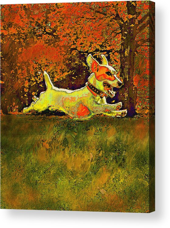 Jane Schnetlage Acrylic Print featuring the digital art Jack Russell In Autumn by Jane Schnetlage