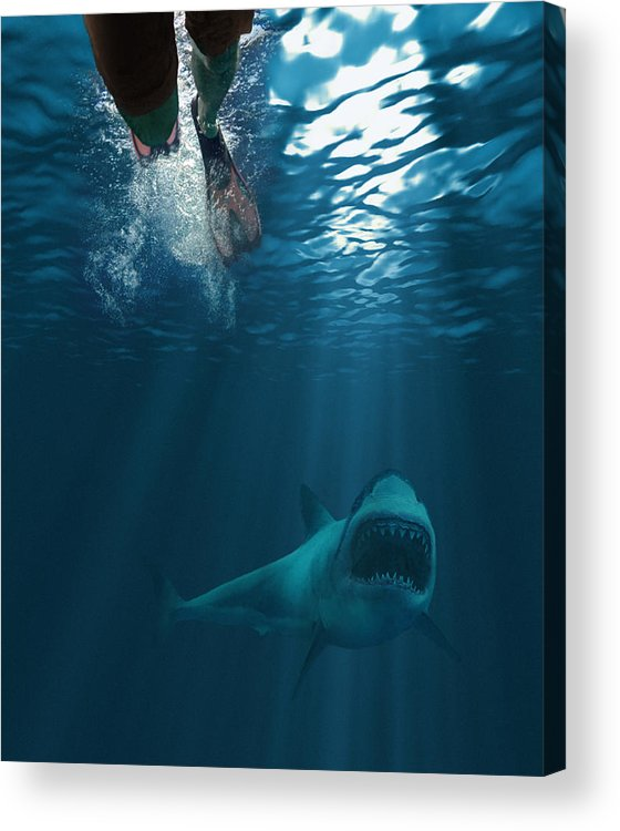 Underwater Acrylic Print featuring the photograph Shark Attack by MediaProduction