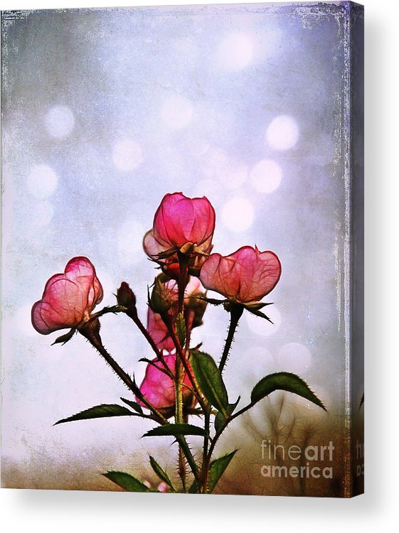 Rose Acrylic Print featuring the photograph Reaching For The Light by Judi Bagwell