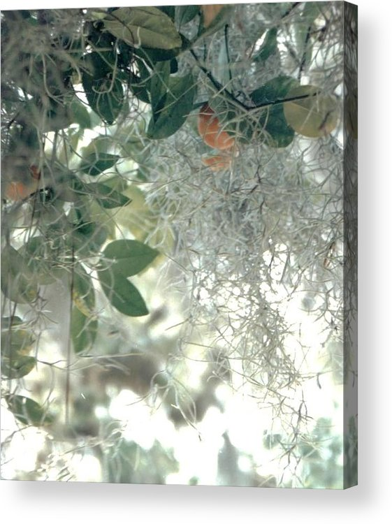 Photograph Acrylic Print featuring the photograph Calamondon And Moss by Debbie Wassmann