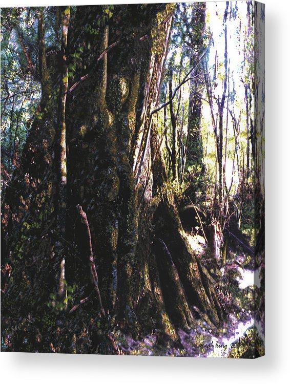 Tasmania Acrylic Print featuring the painting Ancient Pandanii Cradle Mountain Gondwana Rainforest by Sarah King