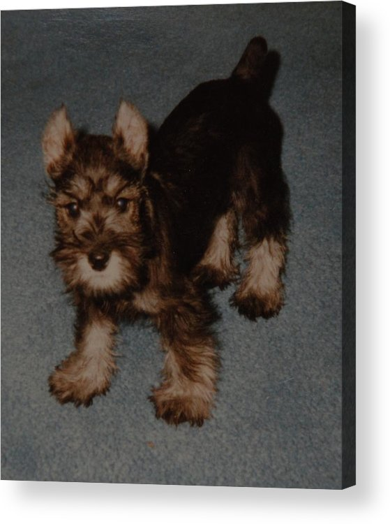 Dog Acrylic Print featuring the photograph Boo Boo by Rob Hans