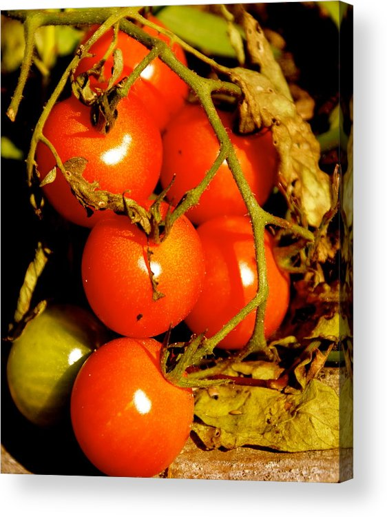 Garden Acrylic Print featuring the photograph Cherry Tomatoes by Sonja Anderson