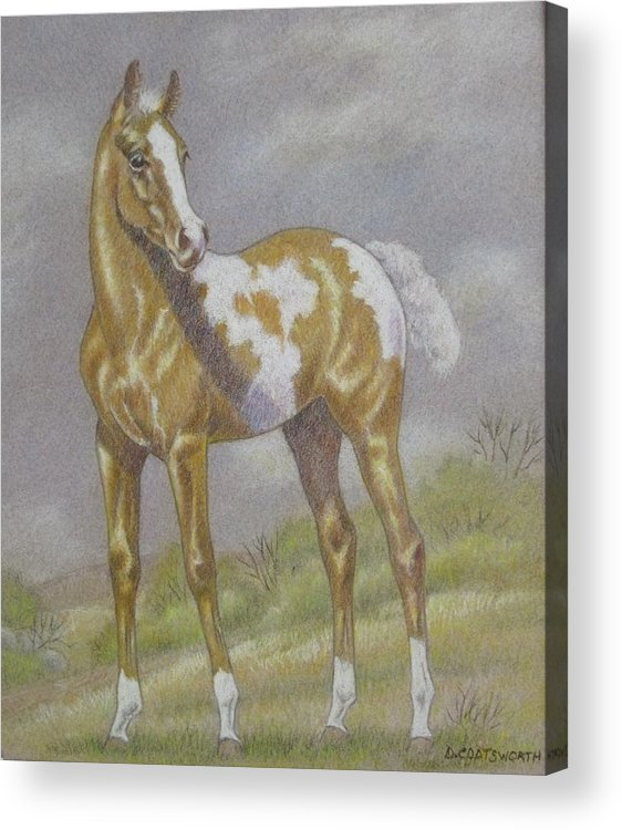 Paint Foal Acrylic Print featuring the pastel Palomino Paint Foal by Dorothy Coatsworth