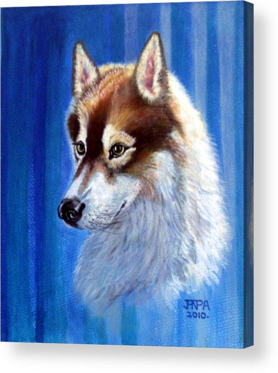 Siberian Husky Acrylic Print featuring the mixed media Sabre by James Richardson