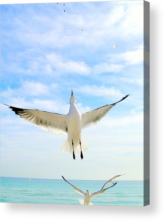 Gulls Acrylic Print featuring the photograph Soaring by George I Perez