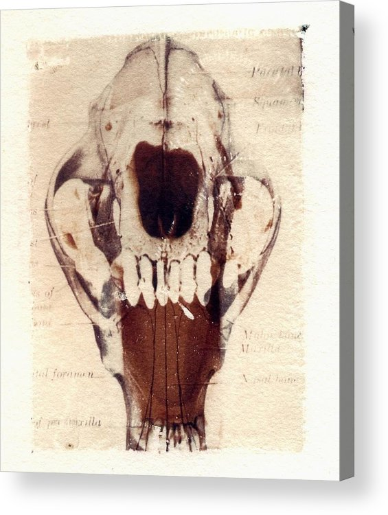 Polaroid Acrylic Print featuring the photograph X Ray Terrestrial by Jane Linders