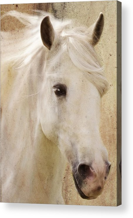 White Stallion Acrylic Print featuring the photograph Andalusian Dreamer by Melinda Hughes-Berland