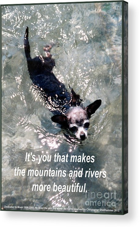 Chihuahua Acrylic Print featuring the photograph Black Chihuahua Dog Its You That Makes The Mountains And Rivers More Beautiful. by Christopher Shellhammer