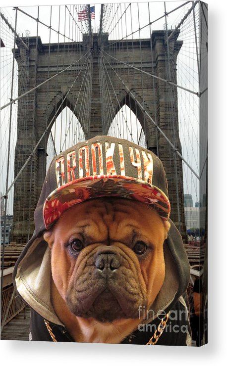 French Bulldog Acrylic Print featuring the photograph Brooklyn Dog by Dianne Ferrer