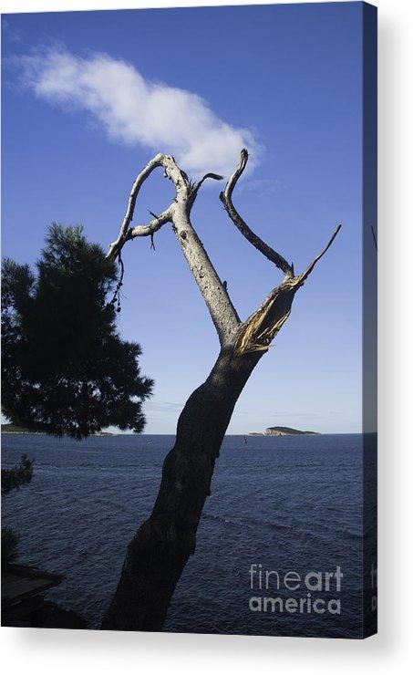 Broken Tree Acrylic Print featuring the photograph Cavtat Tree by James Lavott