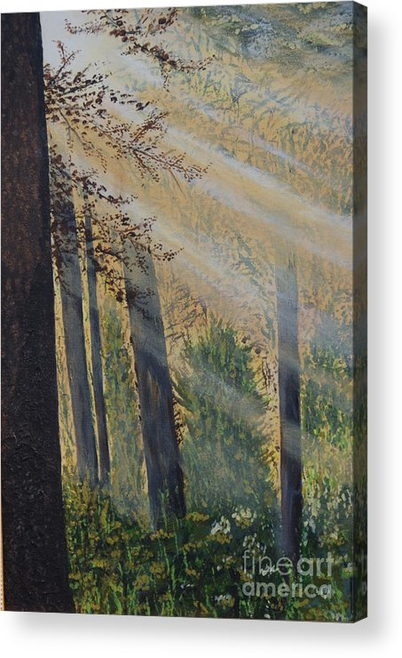 Forest Acrylic Print featuring the painting Early Light by William Ohanlan