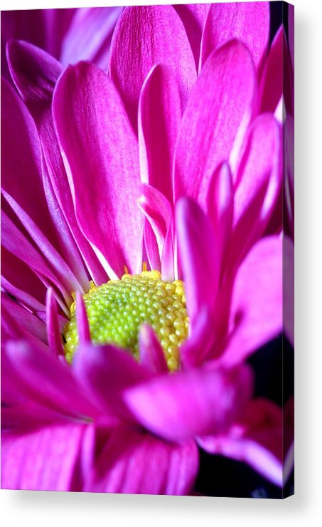 Flower Acrylic Print featuring the photograph From The Florist Too by Joe Kozlowski
