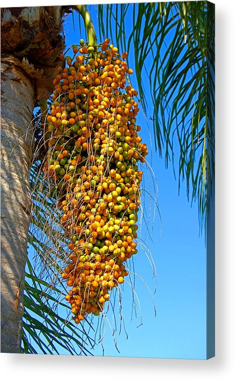 Palm Acrylic Print featuring the photograph Fruit Of The Queen Palm by Donna Proctor
