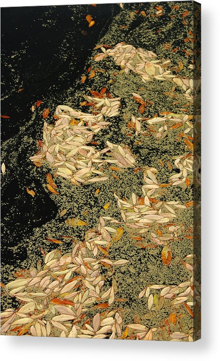 Klimt Acrylic Print featuring the photograph Leaf Abstract Ode To Klimt by Suzanne Gaff