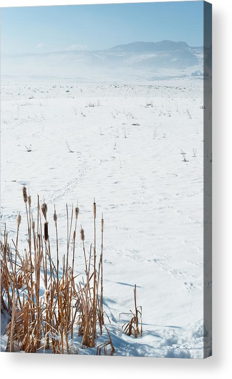 Cattail Acrylic Print featuring the photograph Minimalist Cattail Prairie In Colorado by Julie Magers Soulen