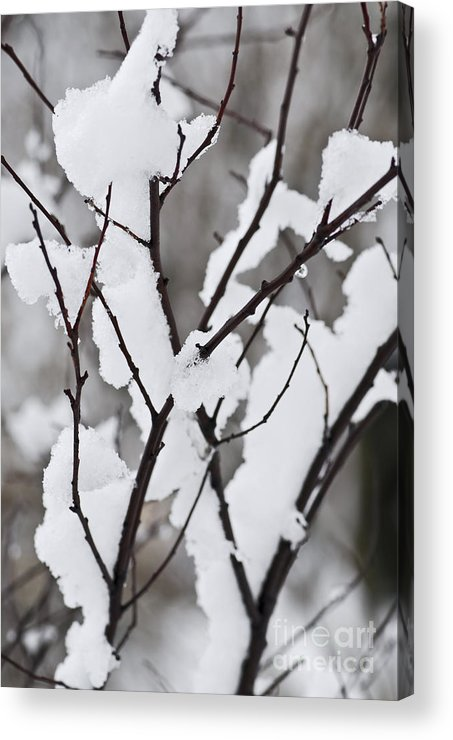 Winter Acrylic Print featuring the photograph Snow Covered Branches by Elena Elisseeva