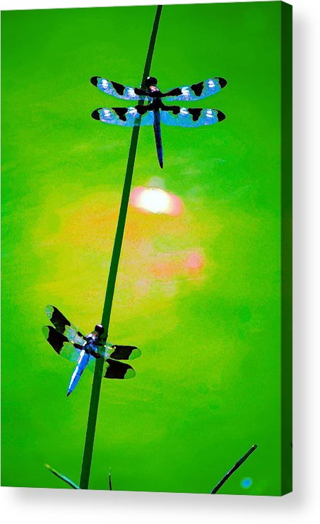 Dragonflies Acrylic Print featuring the photograph The Skimmer And The Whitetail Art #3 by Ben Upham III