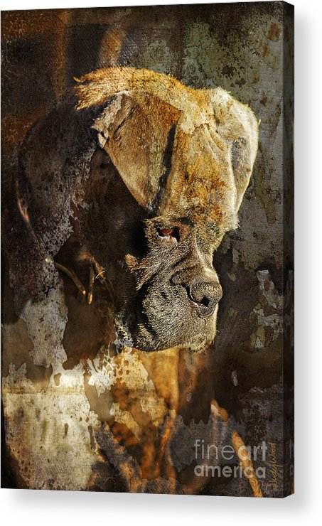 Dog Acrylic Print featuring the digital art Thought Process by Judy Wood