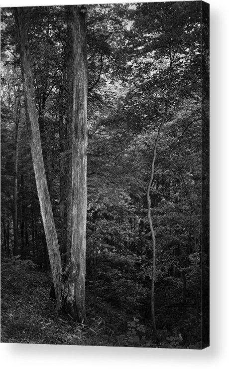 Twilight Acrylic Print featuring the photograph Twilight Woods #1 by Rob Richardson