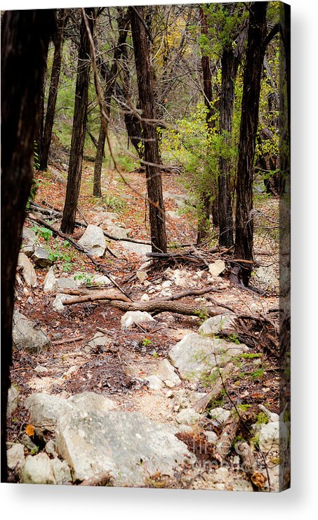 Landscape Acrylic Print featuring the photograph Walk In The Woods by Barbara Shallue
