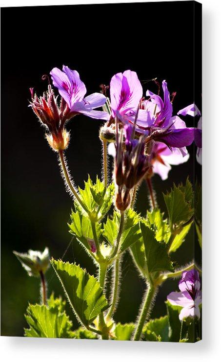 Wild Flowers Acrylic Print featuring the photograph Wild Flowers by Manolis Tsantakis