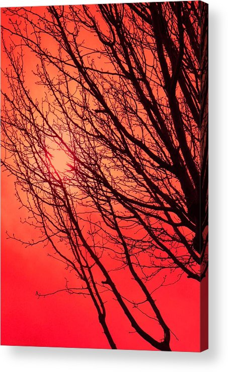 Red Acrylic Print featuring the photograph A Black Winter Tree On Red by Jennifer Holcombe