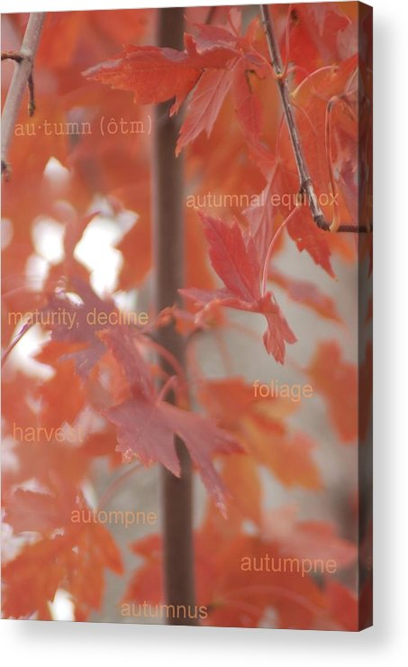 Define Acrylic Print featuring the photograph An Orange Fall Tree With Words by Jennifer Holcombe
