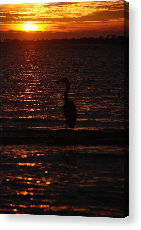 Egret Acrylic Print featuring the photograph Another Day Gone by Renee Holder