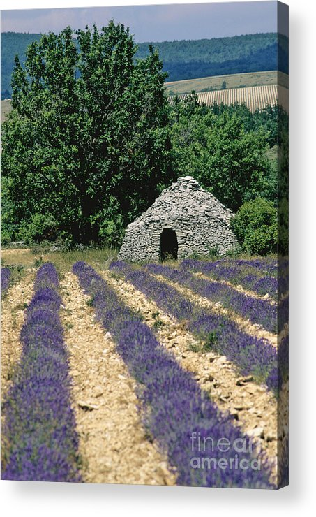 The Tourist Trade Acrylic Print featuring the photograph Field Of Lavender. Sault by Bernard Jaubert