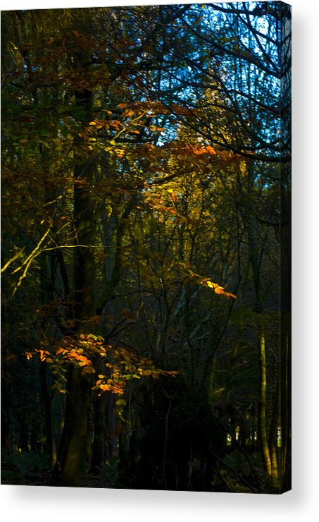 Woodland In Autum Acrylic Print featuring the photograph Golden Woodland by Peter Jenkins