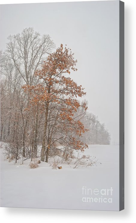 Winter Acrylic Print featuring the photograph Hanging On by Pamela Baker
