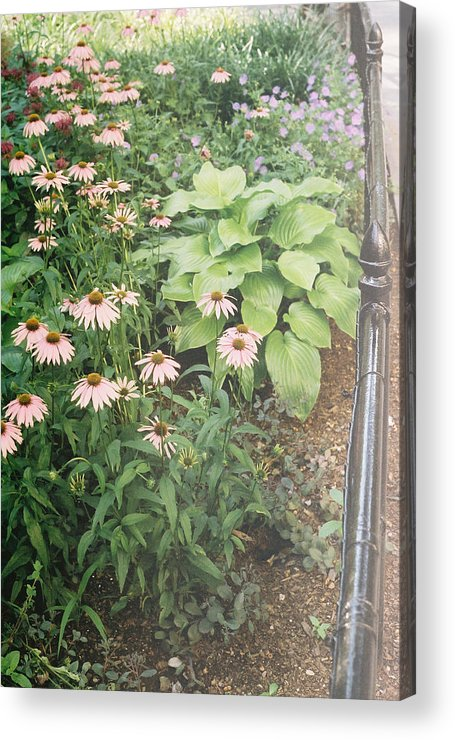 Color Acrylic Print featuring the photograph Madison Square Flowers by Natasha Harsh