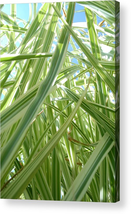 Grass Acrylic Print featuring the photograph Reach For The Sky by