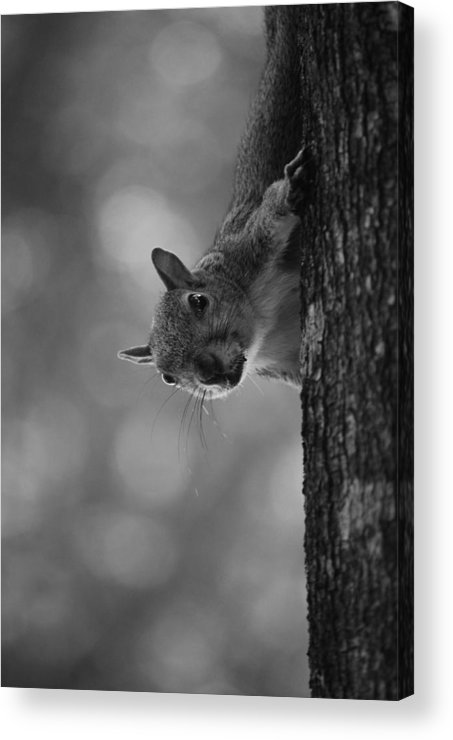 Squirrel Acrylic Print featuring the photograph Squirrel On A Tree by Carrie Munoz
