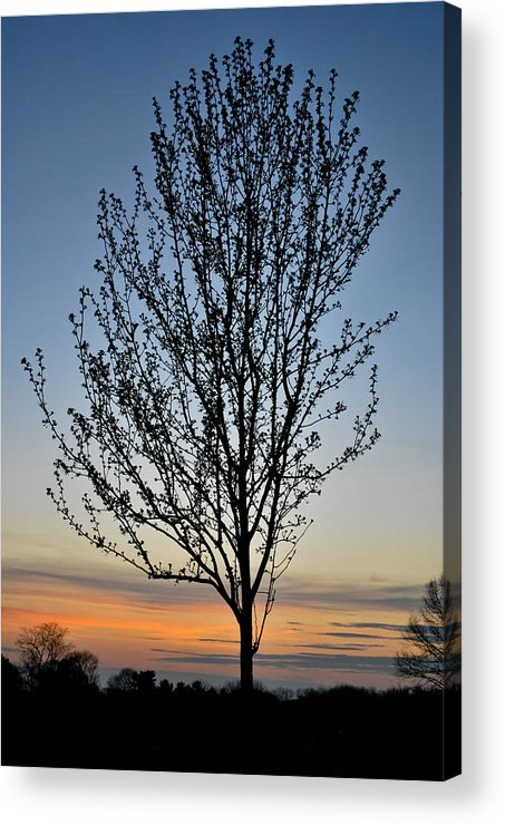 Tree Acrylic Print featuring the photograph Tree At Sunset by Wayne King