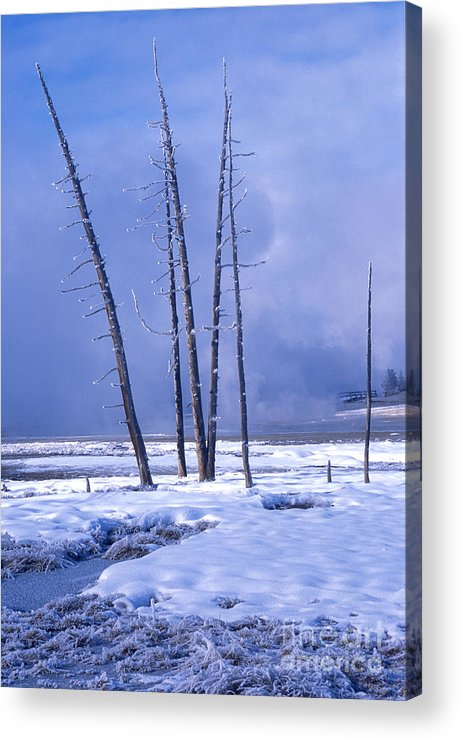 Landscape Acrylic Print featuring the photograph Winter by Sandra Bronstein