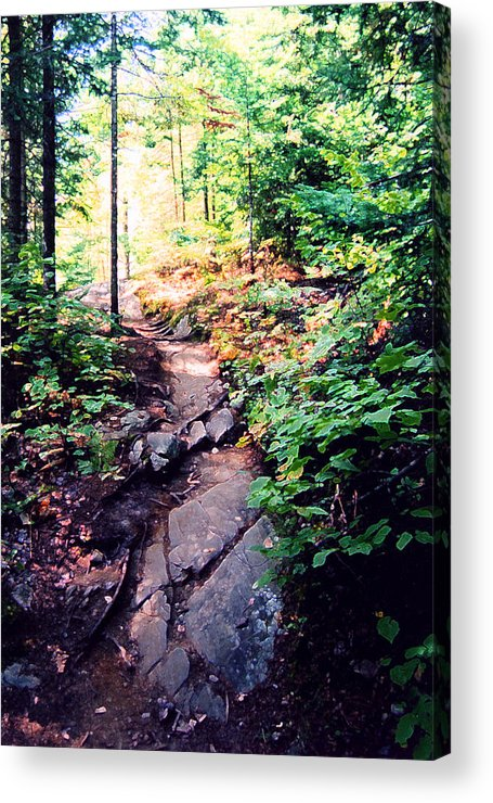Nature Acrylic Print featuring the photograph Along The Path Ae 2 by Lyle Crump